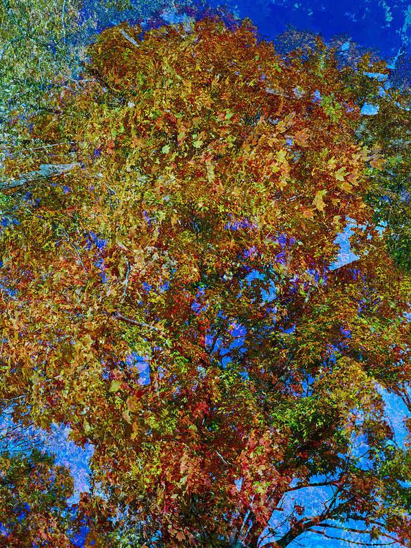 Autumn Art Print featuring the photograph Study For Autumn 1 by Steve Parrott