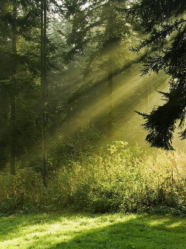 Nature Art Print featuring the photograph Sunlight by Daniel Csoka