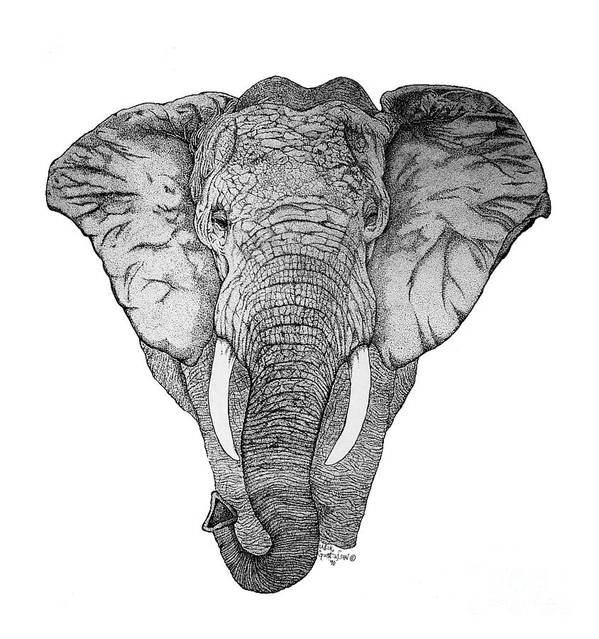 Elephant Art Print featuring the drawing African Elephant by Nick Gustafson