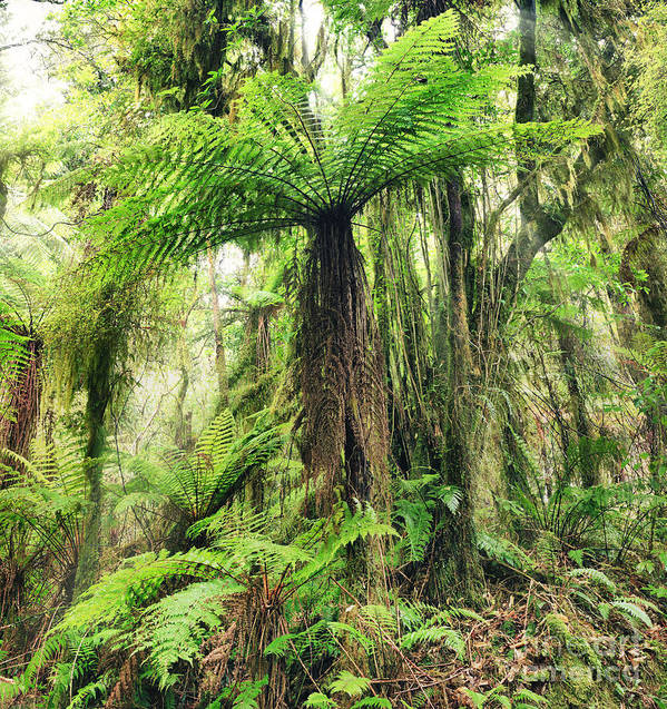 Fern Print featuring the photograph Fern Tree by MotHaiBaPhoto Prints