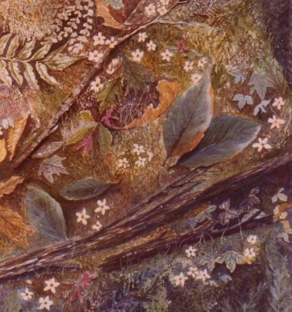 Leaves; Forest; Flowers Art Print featuring the painting Forest Floor by Ben Kiger