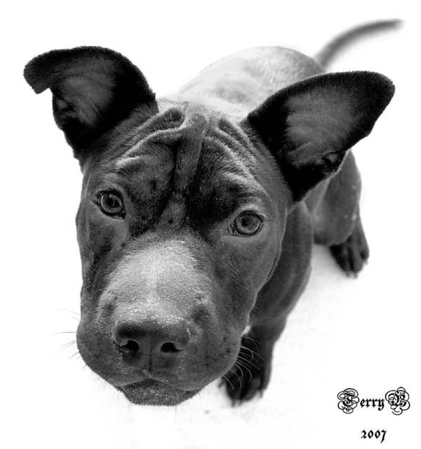 Dog Art Print featuring the photograph Ms. Raisin by Terry Burgess