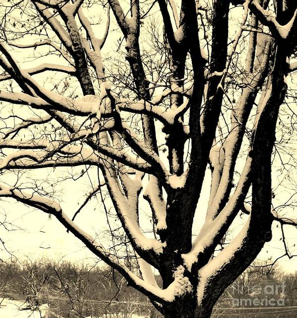 Photo Art Print featuring the photograph Snow Sitting On Top The Tree by Marsha Heiken