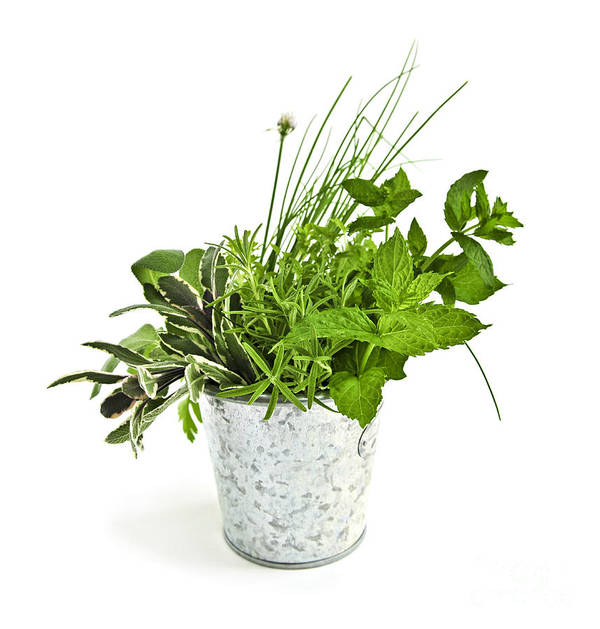 Herb Print featuring the photograph Fresh Herbs by Elena Elisseeva