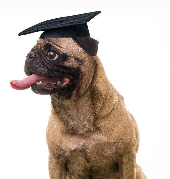 Dog Art Print featuring the photograph Happy Graduation by Edward Fielding