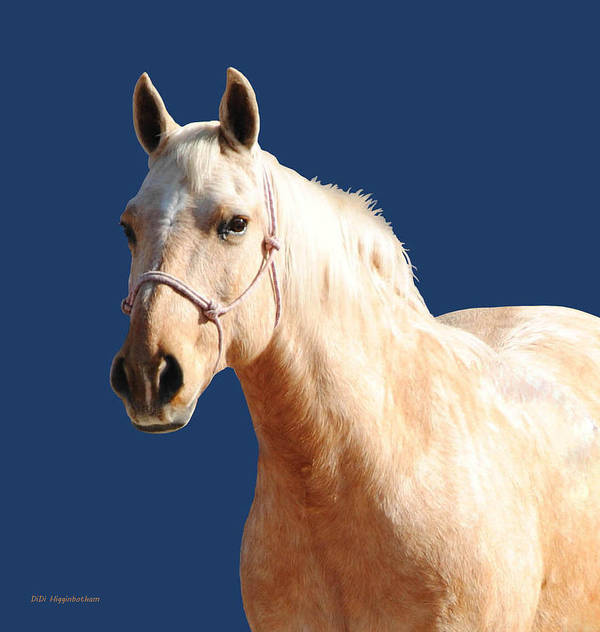 Horse Art Print featuring the photograph Natural Blonde by DiDi Higginbotham