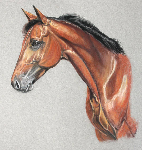 Horse Art Print featuring the drawing Power Pack by Deb LaFogg-Docherty
