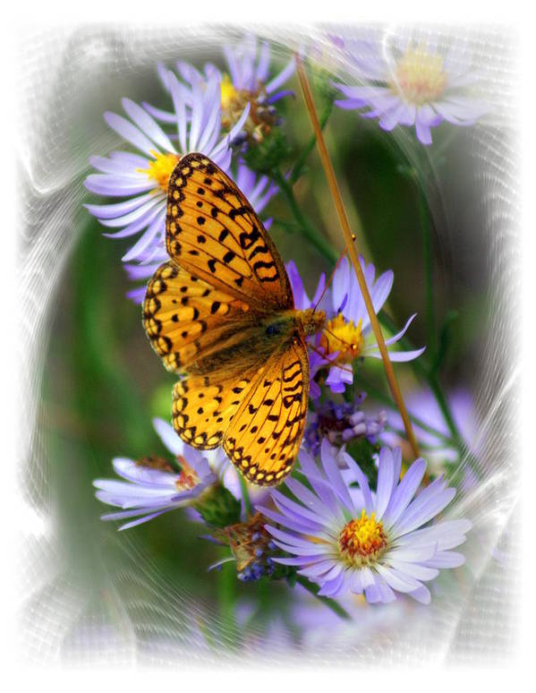 Butterfly Art Print featuring the photograph Butterfly Bliss by Marty Koch