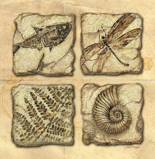 Jon Q Wright Art Print featuring the painting Fossils by JQ Licensing