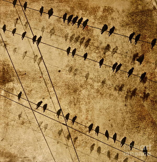 The Black Birds Migrate Past Us On The Island Art Print featuring the painting Ghost Birds On A Wire by Deborah Talbot - Kostisin
