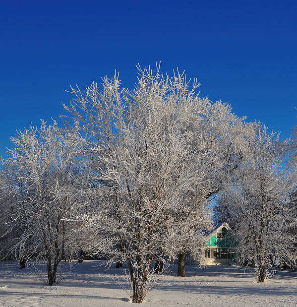Winter Art Print featuring the photograph Frosty Morn by Rusty Enderle
