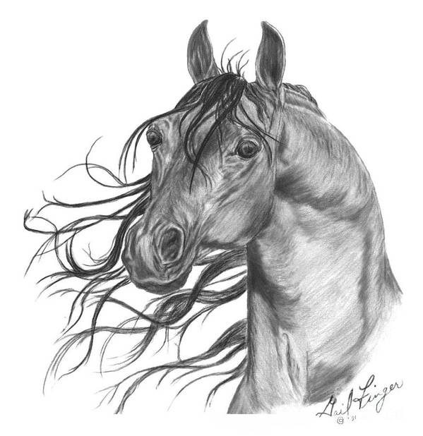 Horse Arabian Equine Art Print featuring the drawing Arabian Head by Gail Finger
