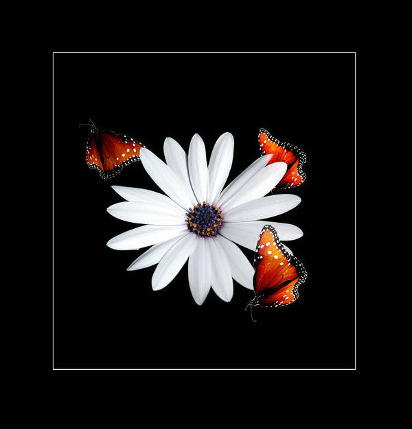 Flower Art Print featuring the photograph Attraction by Richard Gordon