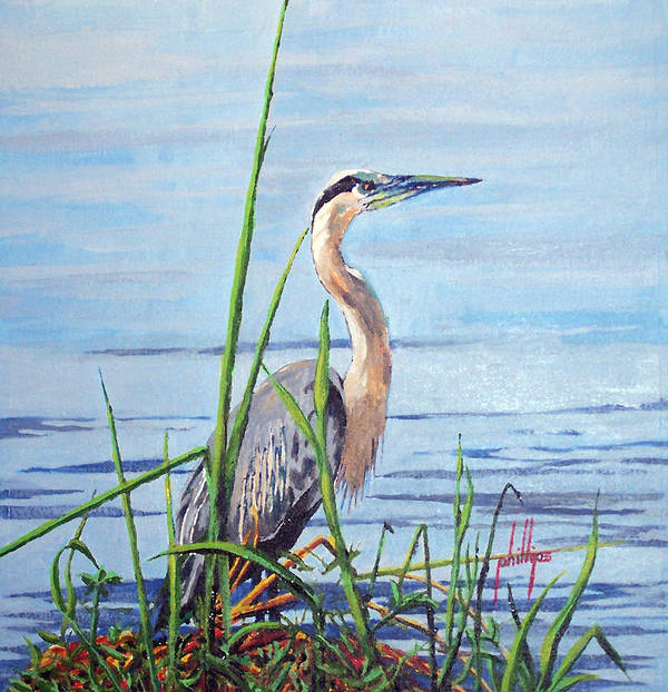 Heron Art Print featuring the painting Blue Heron by Jim Phillips