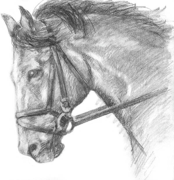 Drawing Art Print featuring the painting Horse's Head With Bridle by Sarah Parks
