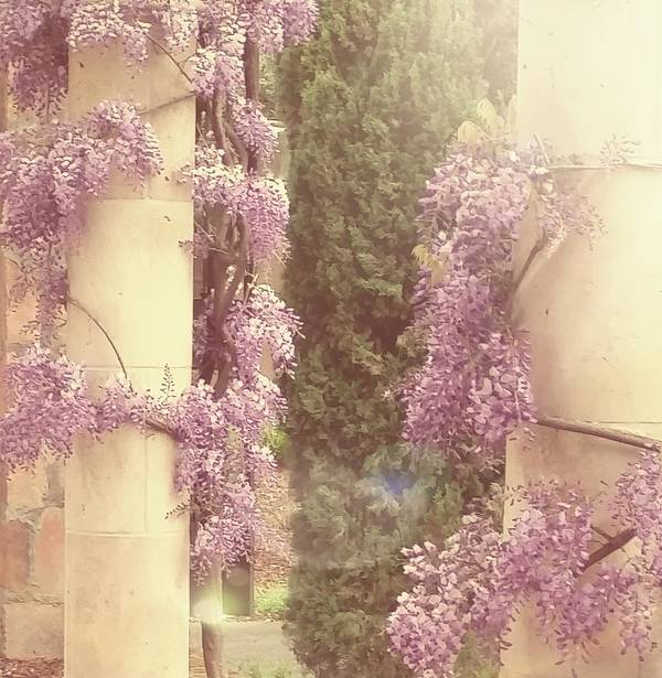 Wisteria Art Print featuring the photograph Peaceful by Angela Eckles