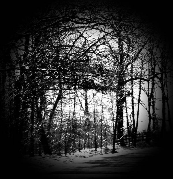 Trees Art Print featuring the photograph Through The Lens- Black And White by Charleen Treasures
