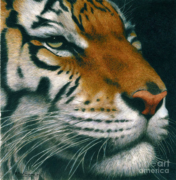 Tiger Art Print featuring the painting Untitled Tiger by Brad Carraway