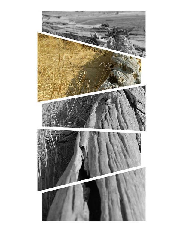 Beach Art Print featuring the photograph Driftwood by Sara Kirk