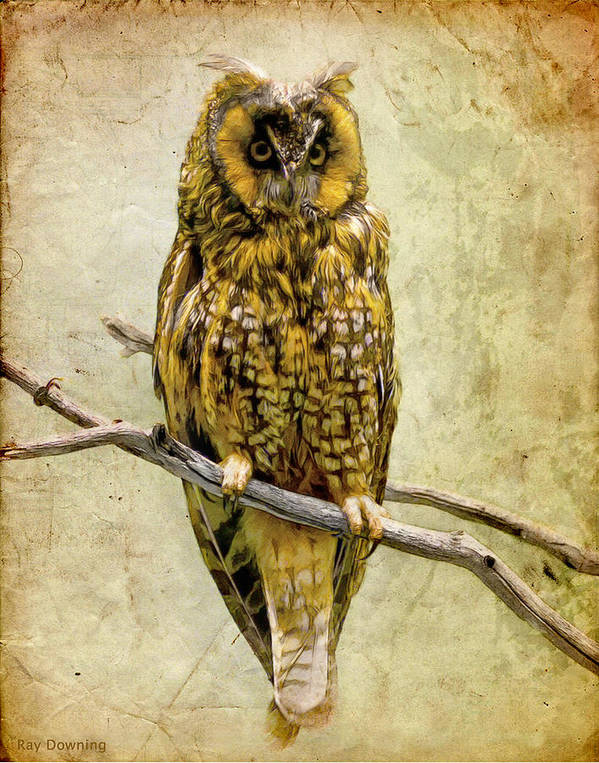 Owl Art Print featuring the digital art Long Eared Owl by Ray Downing