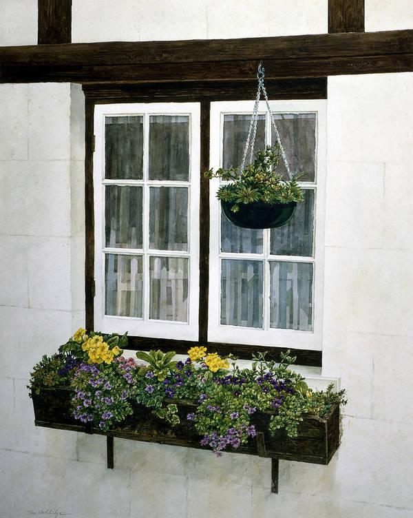 Still Life Art Print featuring the painting Window Box by Tom Wooldridge