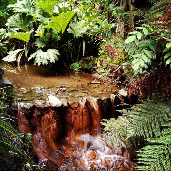 Forest Art Print featuring the photograph Stream by Les Cunliffe