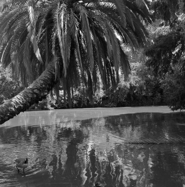 Black And White Art Print featuring the photograph Awesome Pond 1 by Denise Mazzocco
