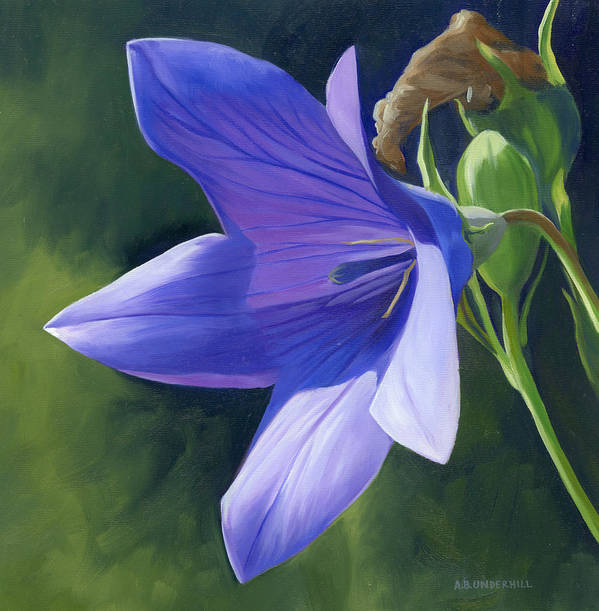 Flower Art Print featuring the painting Balloon Flower by Alecia Underhill