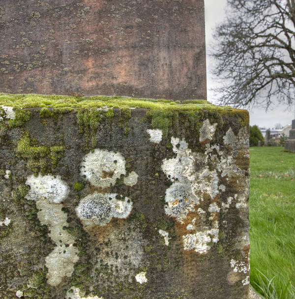Graf Art Print featuring the photograph Moldy Above And Below by Jean Noren