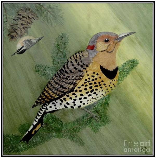 Northern Flicker Art Print featuring the painting Northern Flicker And Red-breasted Nuthatch by Sandra Maddox