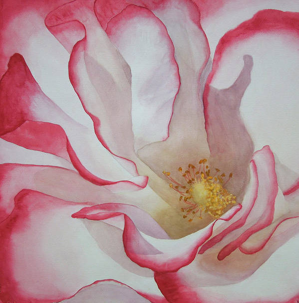Floral Art Print featuring the painting Rosa by Genevieve Davidson