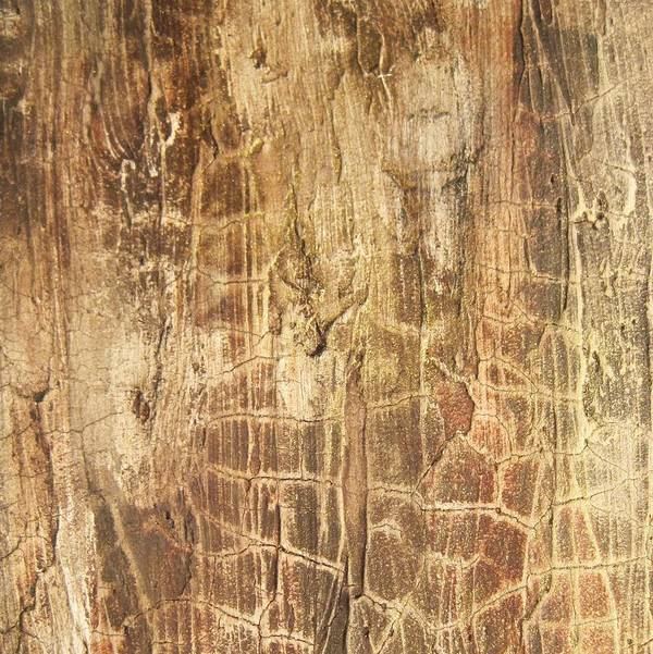 Original Abstract Painting Art Print featuring the painting Tree Bark by Alan Casadei