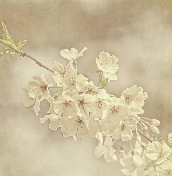 Flower Art Print featuring the photograph Wisdom by Kim Hojnacki