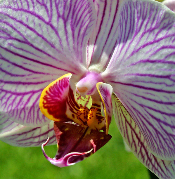 Ribet Art Print featuring the photograph Exotic Orchids Of C Ribet by C Ribet