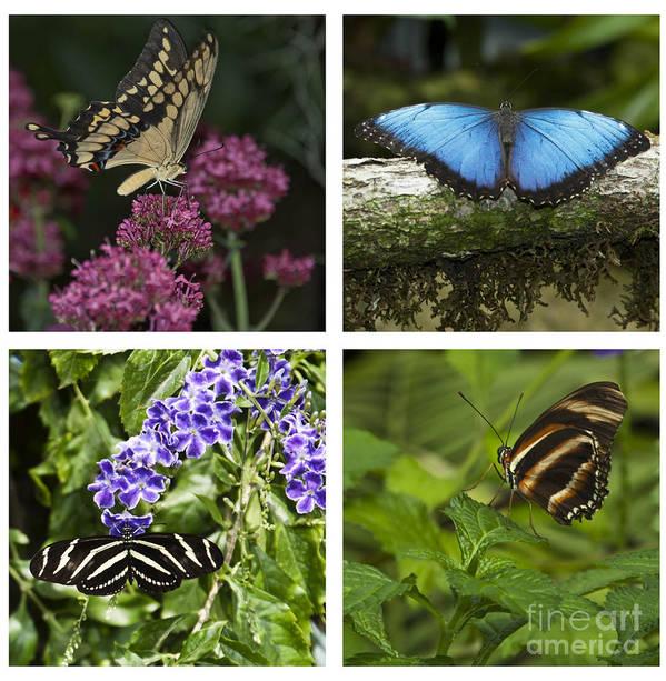 Butterflies Art Print featuring the photograph Butterflies by Eileen Mandell