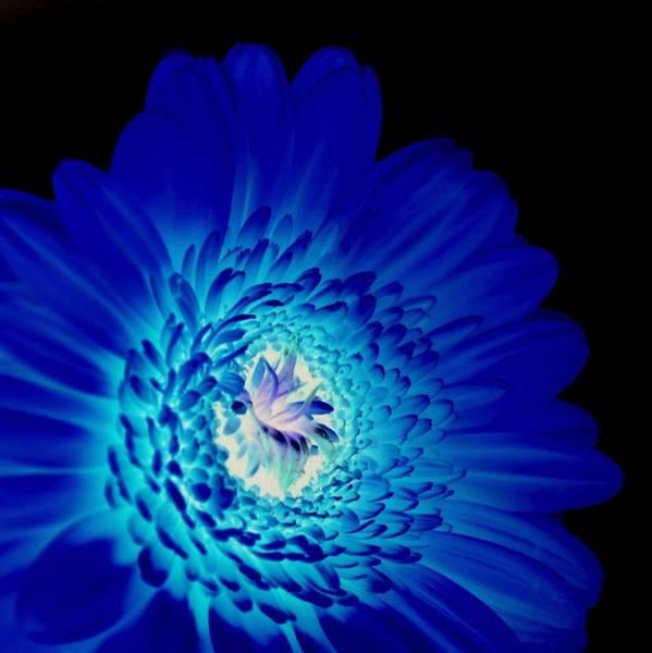 Inverted Colour Art Print featuring the photograph Glow Blue by Lovella Dagum