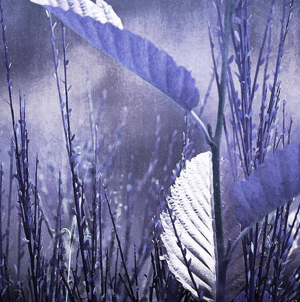 Lavender Art Print featuring the photograph Lavender Leaves by Bonnie Bruno