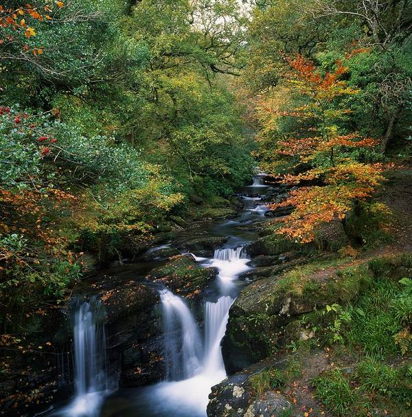 Autumn Leaves Art Print featuring the photograph Torc Waterfall, Ireland,co Kerry by The Irish Image Collection