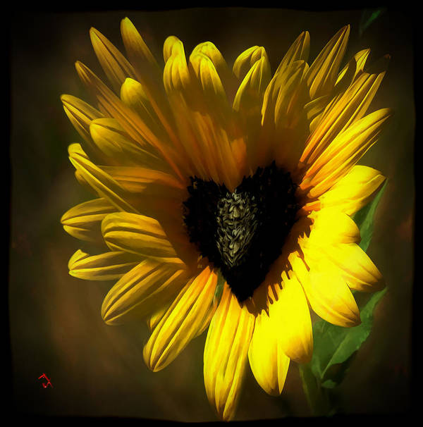 Flower Art Print featuring the painting Love Sunflower by Adam Vance