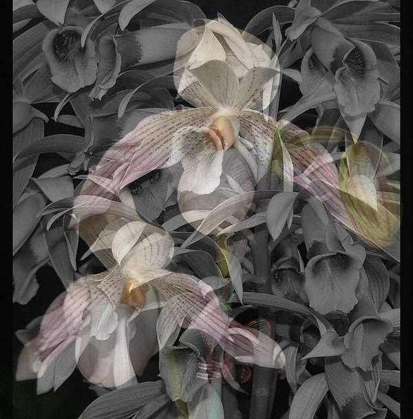 Orchid Art Print featuring the photograph Angelic Hosts The Hooded Nun Orchid by Mindy Newman