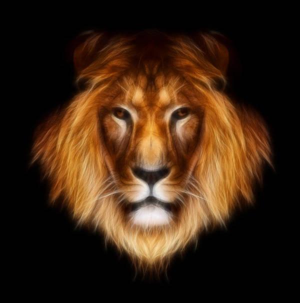 lion Prints Print featuring the photograph Artistic Lion by Aimelle
