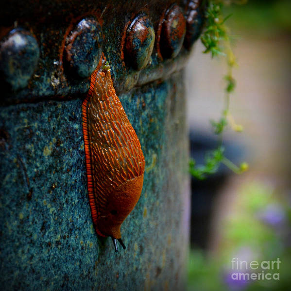 Animal Art Print featuring the photograph Beautiful Slug by Tanya Searcy