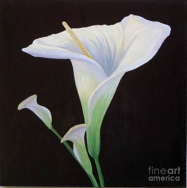 Flower Portrait Art Print featuring the painting Calla Lily X by Mary Erbert
