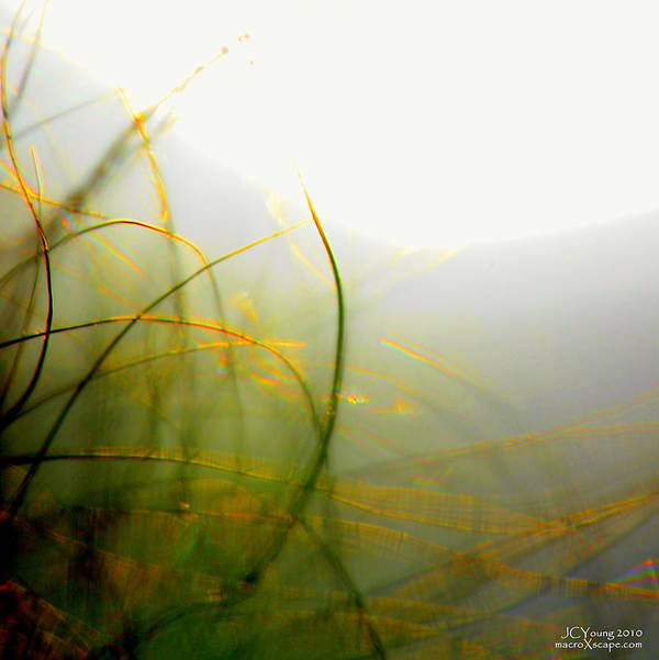 Fog Art Print featuring the photograph Dense Fog by Jim Young