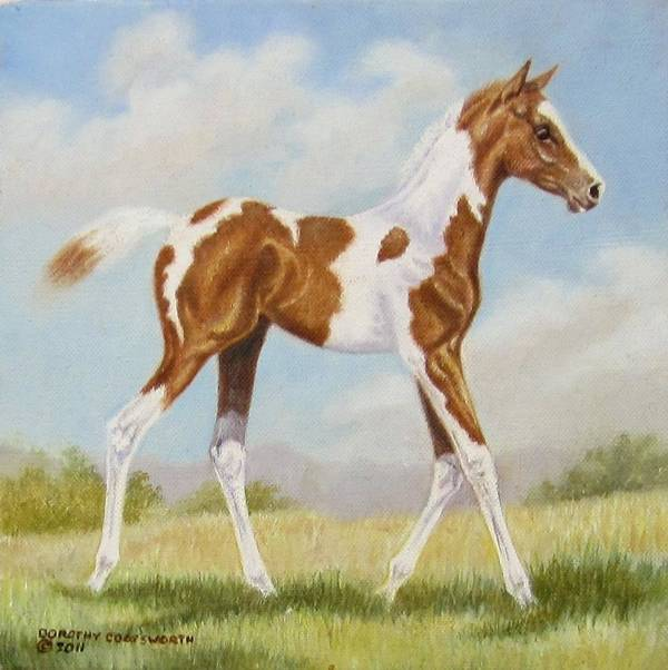 Horse Art Print featuring the painting Half Arabian Pinto Filly by Dorothy Coatsworth