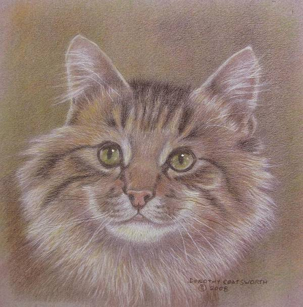 Art Print featuring the painting Maine Coon Cat by Dorothy Coatsworth
