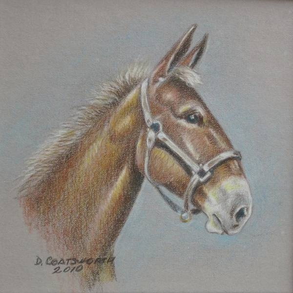Art Print featuring the painting Mule Head by Dorothy Coatsworth