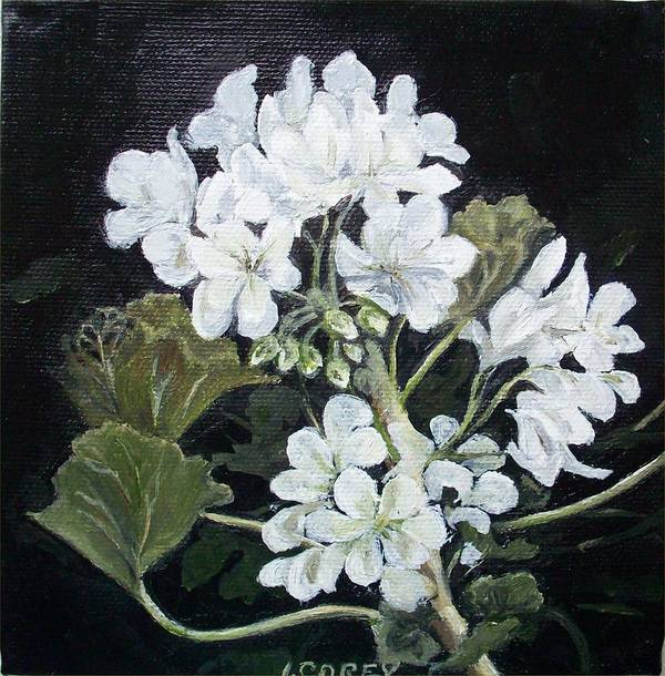White Geranium Art Print featuring the painting Opposite Attraction by Irene Corey