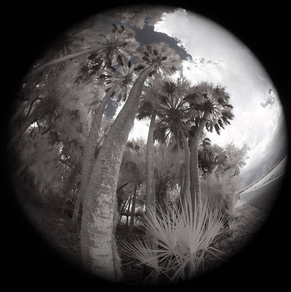 Trees Art Print featuring the photograph Palm Community by Gary Bartoloni