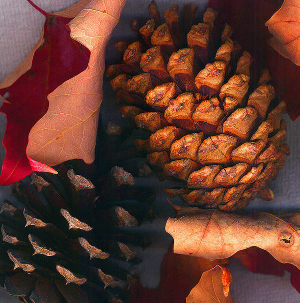 Pine Cones Art Print featuring the photograph Pine Cones And Leaves by Nancy Mueller